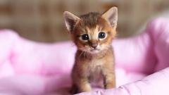 Днес е Световен ден на котките