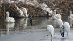 Правителството оспорва иска на ЕК за дивите птици