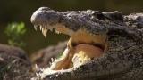 Кубински крокодил се срещна с папата