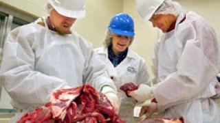 Засичат 17 тона месо в незаконна фабрика в Разград