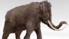 Български и македонски учени откриха останки на животно на 8 млн. години
