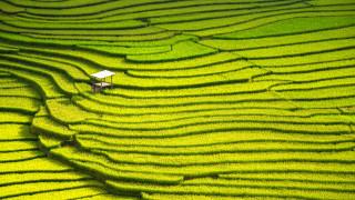 Глобалното затопляне намалява протеина в основни посеви