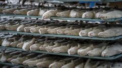 Нов ужас в Дания: Избитите норки започнаха да се показват от масов гроб