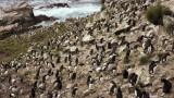 Остров Пебъл, пингвините и как може да си го купим