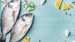 Европа е изяла собствената си риба за тази година