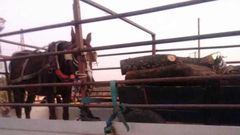 Хванаха бракониер с условна присъда за кражба на дърва вземлището