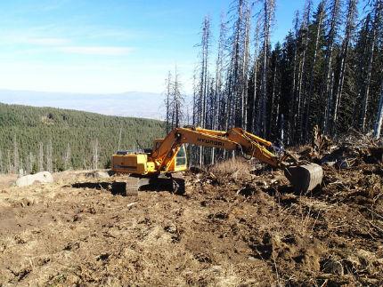 Варварска сеч на Витоша – унищожени са 20 декара гора