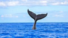 Как един кит се озова в джунглата на Амазонка