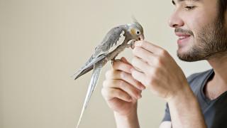 4 причини да изберем папагал за домашен любимец