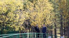 Двете Кореи започнаха да разминират демилитаризираната зона