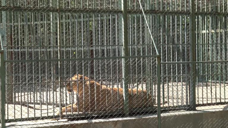 Крадци задигнаха храна за животните от зоопарка в Благоевград