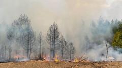 Пожар избухна край вилната зона край Харманли