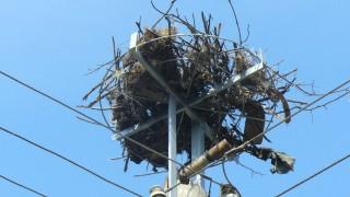 Близо 2500 щъркелови гнезда са обезопасени за 10 г.