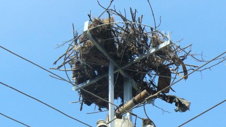 166 нови платформи за обезопасяване на щъркелови гнезда върху стълбове