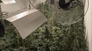 Разбиха оранжерия за марихуана във Варна