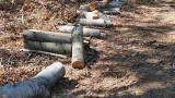 """Трети пореден протест срещу изсичането на гората в """"Коджа тепе"""" край Варна"""