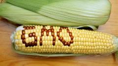Русия спира производството на генномодифицирани храни
