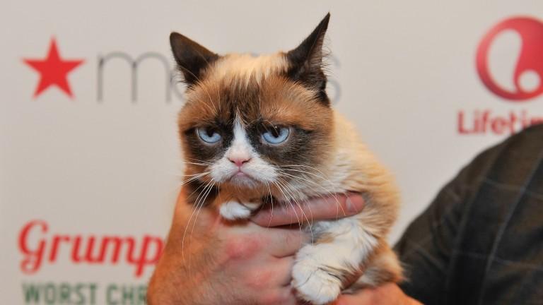 Тардар Соус, по-известна като Намръщената котка, която преди няколко години