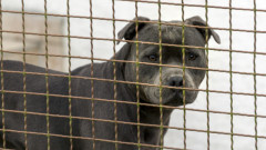 Втори случай на нахапано от куче дете в София