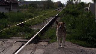 4800 бездомни кучета заловени за година в София