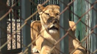 МОСВ проверява зоопарка в Хасково заради смъртта на двете лъвчета