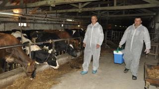 Падат ограничения за фермерите ни след епидемията от нодуларен дерматит