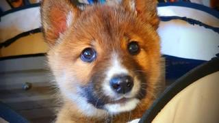 Спасеното куче, което не е куче