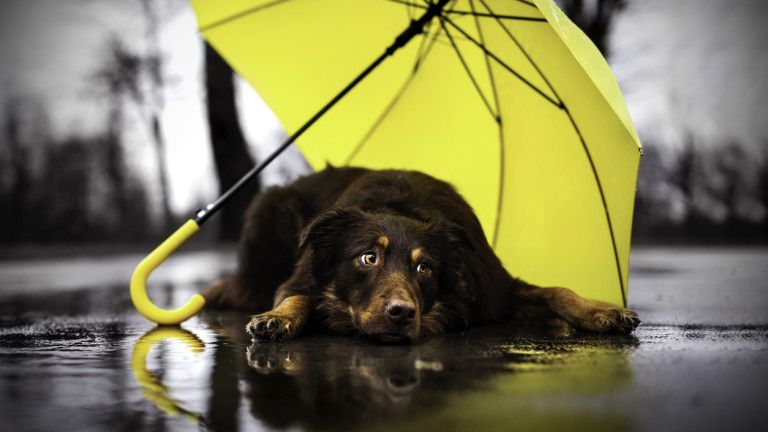 100 лева на година за всеки, който осинови бездомно куче в Каварна