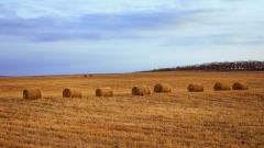 40% от земеделската земя в Румъния се контролира от чужденци