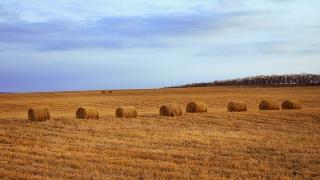 Цената на земята в Североизточна България достига 1000 евро/дка