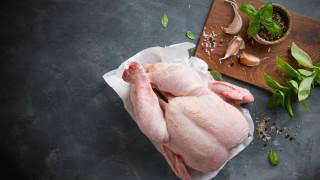 България е седма по влагане на антибиотици в пилешкото месо
