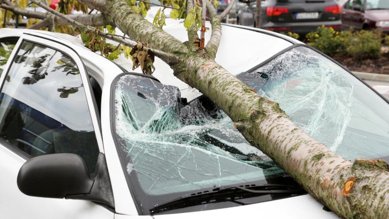 Ураганен вятър събори три дървета във Варна