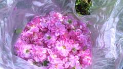 Закон гарантира произхода и качеството на продуктите от маслодайна роза