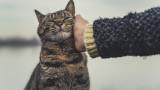 Котките, отглеждането им в домашни условия и как да бъдат щастливи