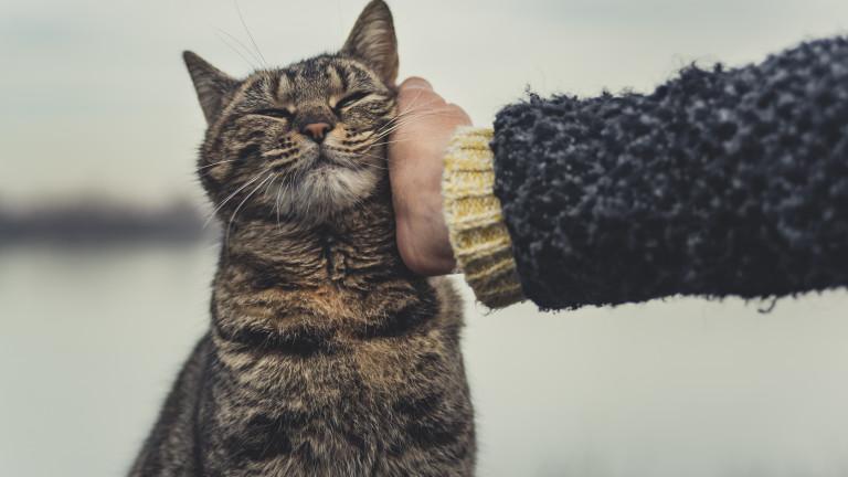 Как да сме сигурни, че котката ни е щастлива