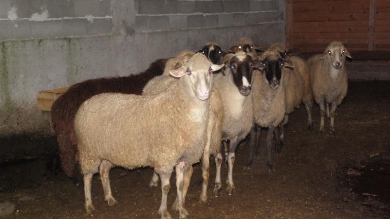 """Увеличават помощта """"де минимис"""" на 47 лв. за стопаните на евтаназирани животни"""