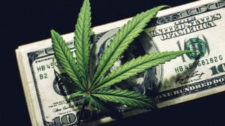 Какви са заплатите в легалната канабис индустрия?