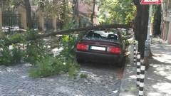 Майка с количка се размина на косъм с паднало дърво в София