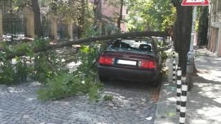 Дърво падна върху две коли в София