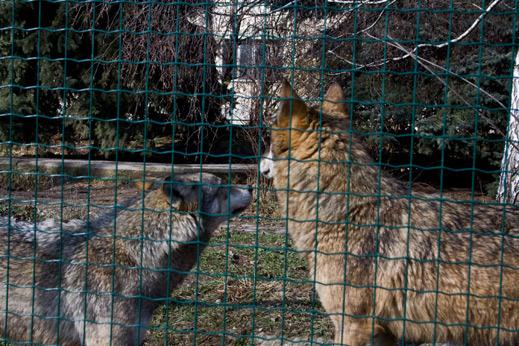 Животните в Зоологическа градина София, предлагани за осиновяване