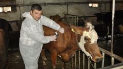 Още 100 000 ваксини за животните в Южна България пристигат до края на месеца
