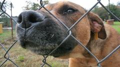 Глобяват софиянци, печелещи от кучетата си