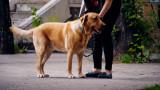 Кастрират безплатно дворни домашни кучета в София