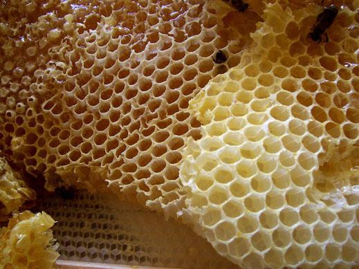 Странджанският манов мед може да бъде вписан като защитено географско указание