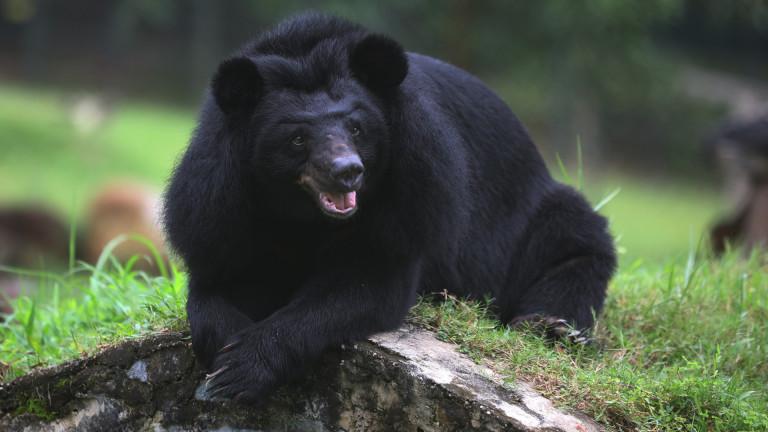 Румънец уби мечка с брадва