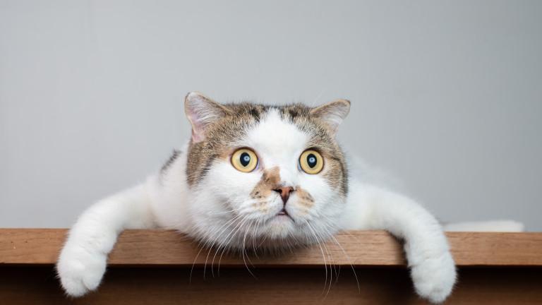 Ветеринарният факултет към университета в Лиеж потвърди случай на котка