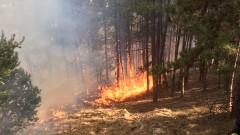 10 дка борова гора изгоряха при пожара край Радомир