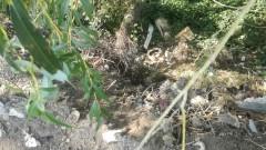Изхвърлиха 14 тона токсични отпадъци край гара Яна