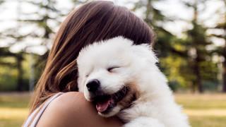 Кога ревнуват кучетата