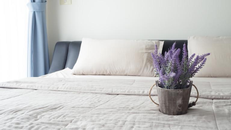 Пет растения за спалнята